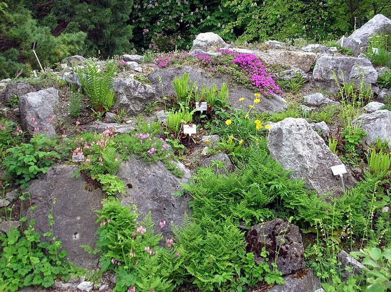 Alpine plants from North America