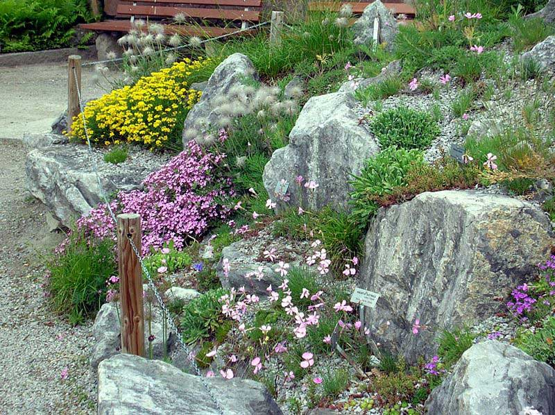 Alpine plants from the Northern Lime Alps