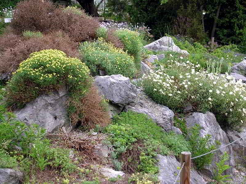 Alpine Plants from the Westalps and the Pyrenees