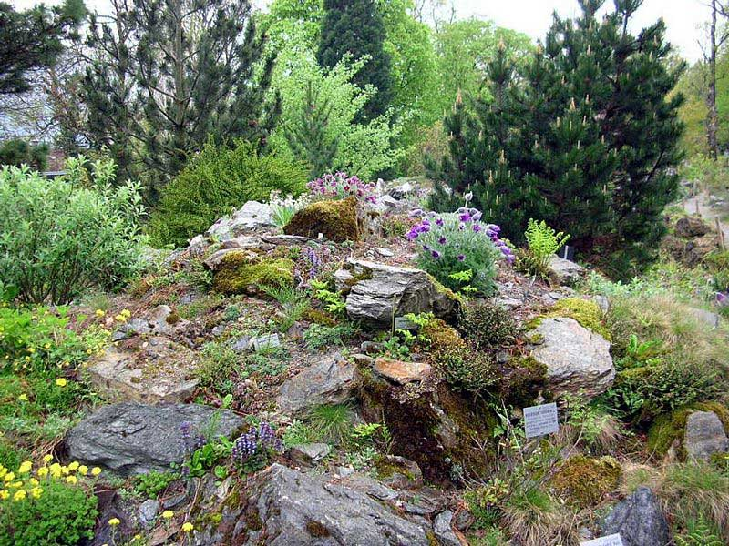 Alpine plants from the Central Alps