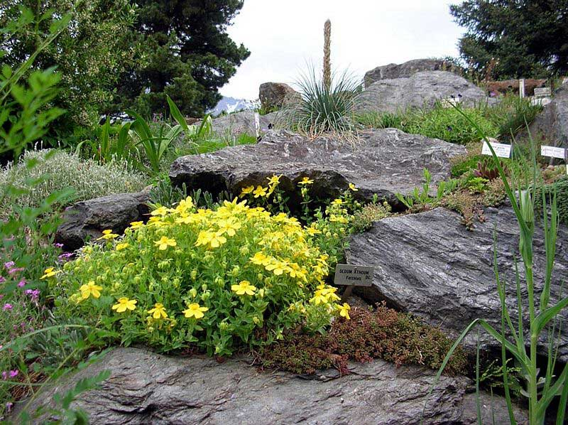 Alpine plants from the Balkans - Asia Minor - Caucasus