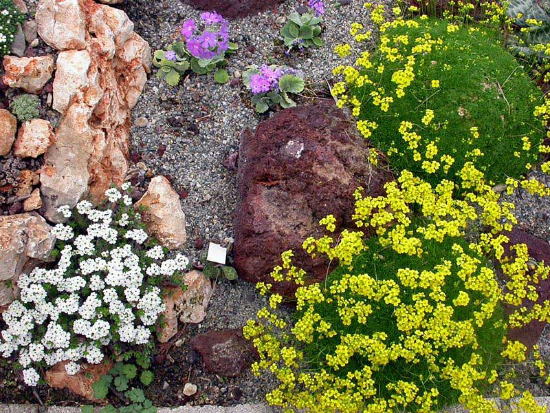 Alpine plants in the Sandbed