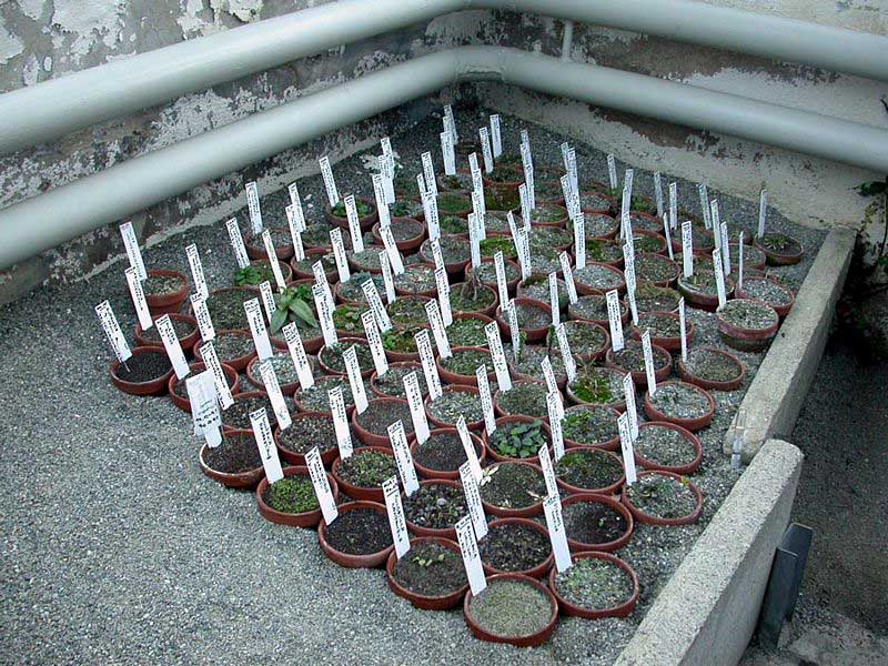 Seedpots of alpine plants