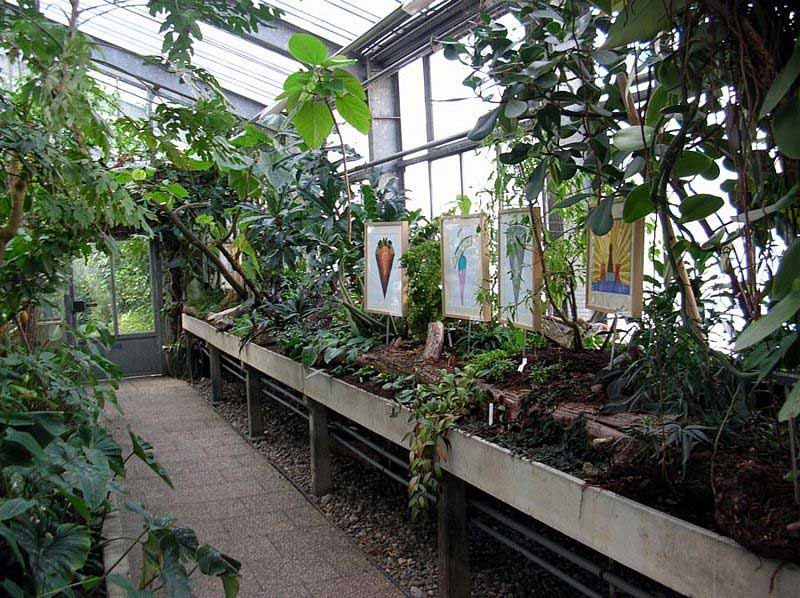 Art in the Tropical Greenhouse