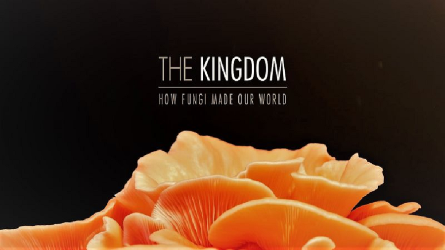 The Kingdom - How Fungi Made Our World